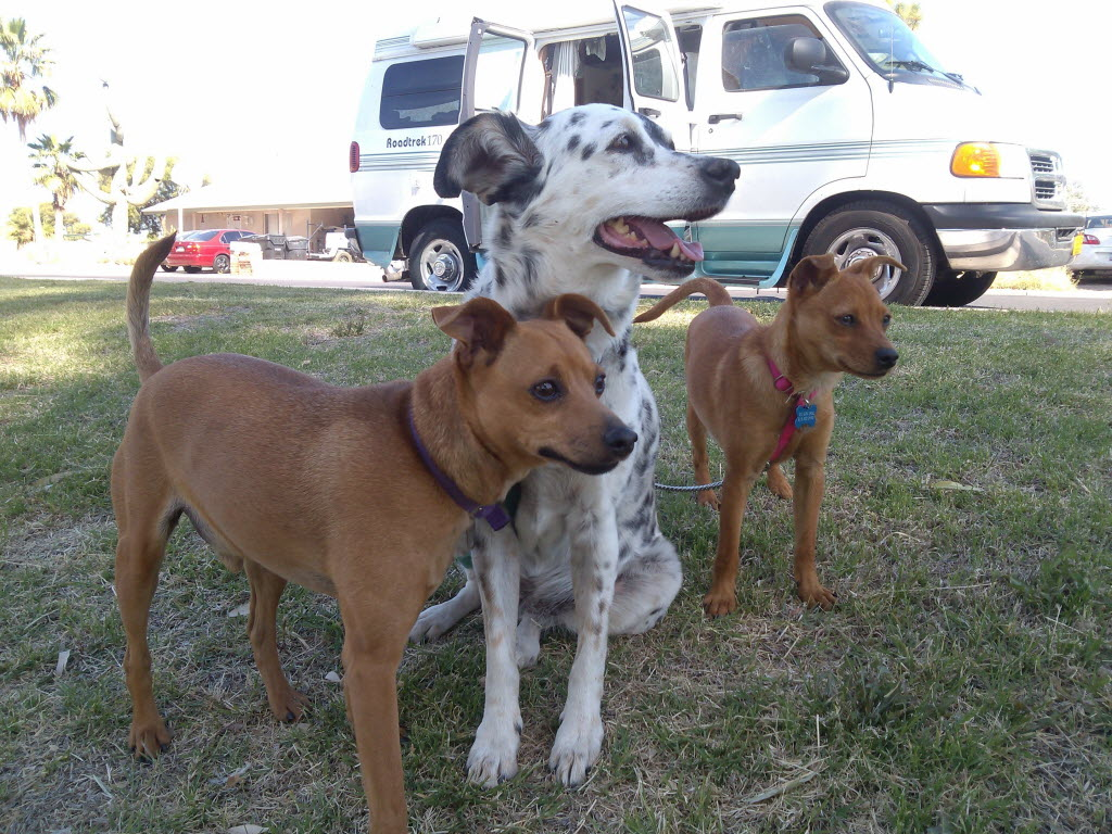 1235618 bytes; 3264 x 2448; Piper (right) stands with her new pack members, Tigger (left) and April in front of Carol Born's RV.