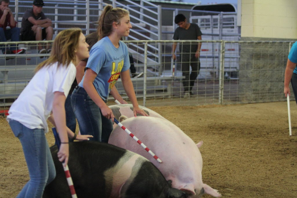 400568 bytes; 2592 x 1728; Jade Campbell, 15, (left) and Kayla Urbino, 15, practice showing their pigs at Heritage High School